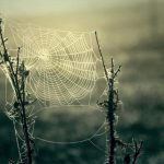 Spiderwebs