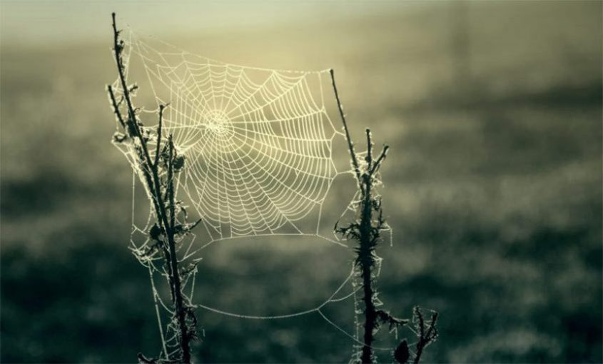 Spider Webs A Halloween Reminder Of How Our Brains Work Mybrainware