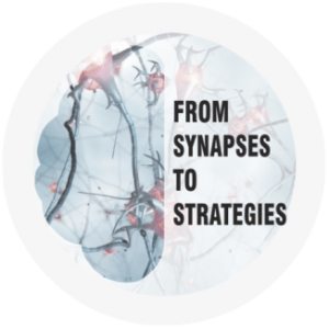 Shop Synapses strategies copy