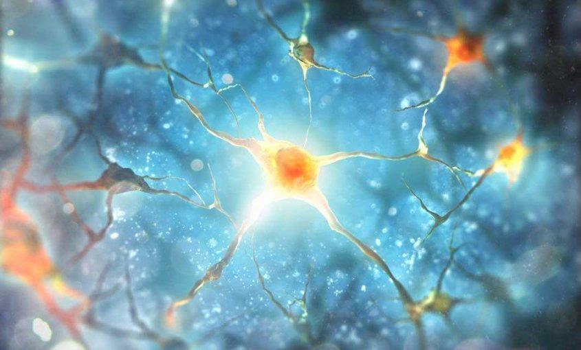 Neuroplasticity Begin To Change Life >> The Power Of Neuroplasticity Mybrainware