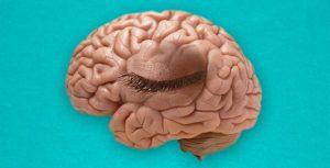 Brain Blink
