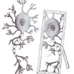 How Mirror Neurons Signal Empathy and Moral Decision-Making