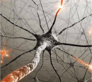 Neuroscience Based Learning Strategies