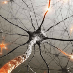 Neuroscience-Based Learning Strategies for Teachers and Students