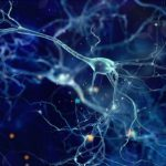 How Neurons Multitask