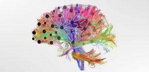 Brain Hubs and Networks