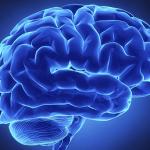 NUI Galway Brain Meta-Analysis