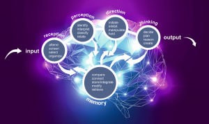 BrainWare Learning Cognitive Processing Model